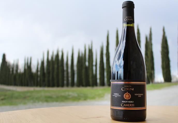 Vino Pinot Nero Camerti Tenuta Corini